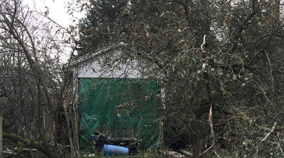 Newstead's shed hidden in years of wild growth